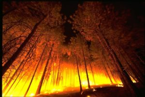 Wildfire Prevention and Safety